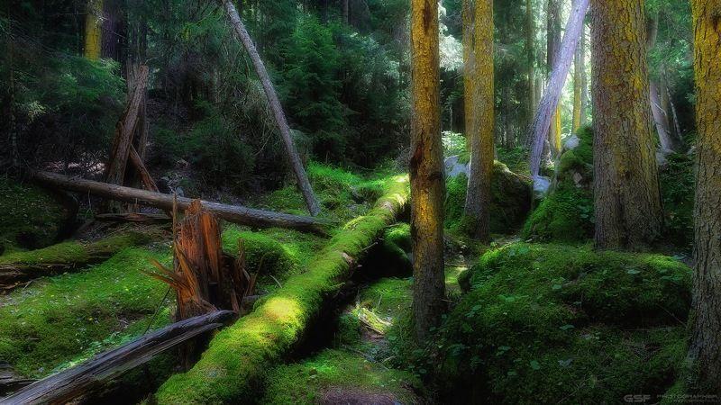 природа лес пейзаж бурелом Наломал дров...photo preview