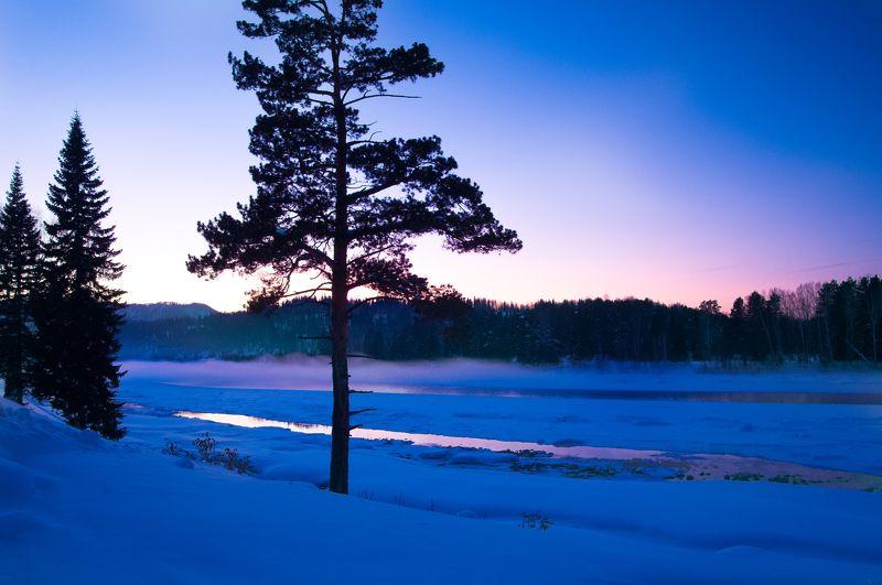 зима, вечер, закат, сосна Одиночествоphoto preview
