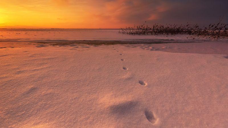 закат, пейзаж, водохранилище, Рыбинск, следы, снег, тростник, небо По следам photo preview