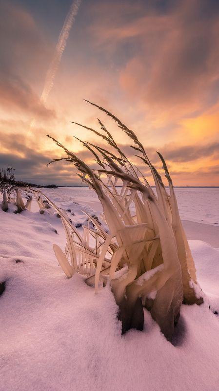 лед, растения, закат, море, водохранилище, Рыбинск, снег, зима Скованные во льдахphoto preview