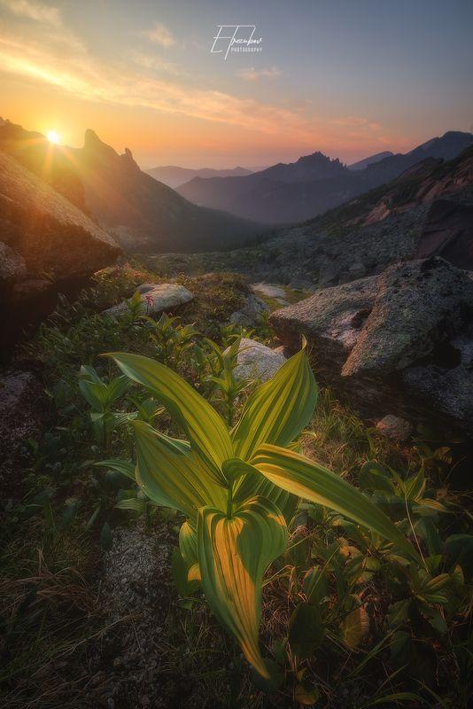 ергаки, свет, закат, солнце, трава, куст, горы Свет и магия заката!photo preview