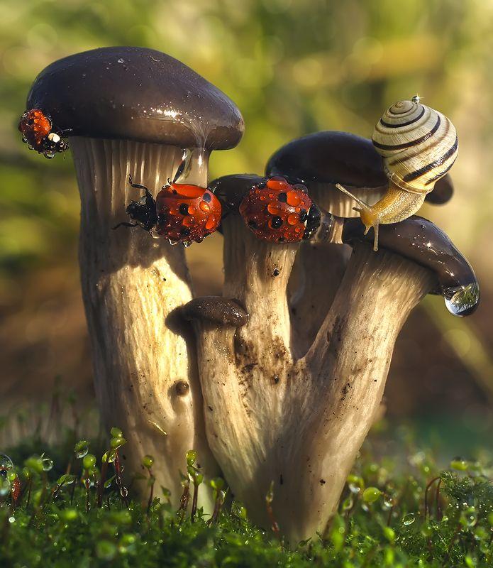 божья коровка,улитка,грибы,осень Своя среди чужихphoto preview
