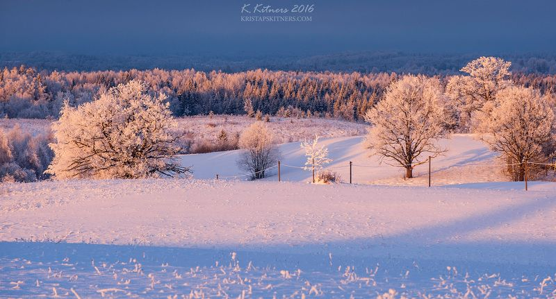 snow frost forest tree blue white winter sky clouds latvia landscape field sun sunset cold Snowy Afternoonphoto preview