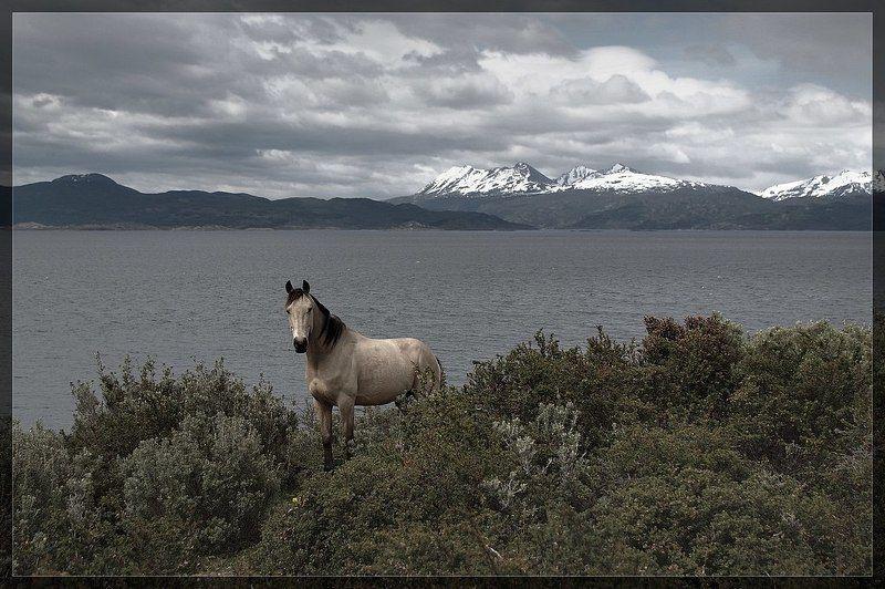 пейзаж, кони Самый Южный коньphoto preview
