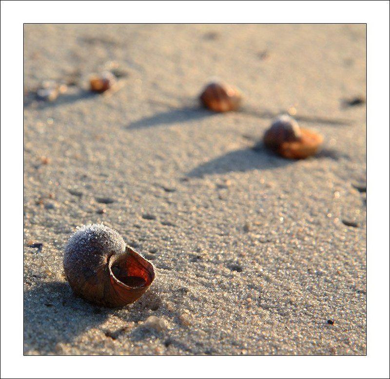 раковина, песок, зима, лед * * *photo preview