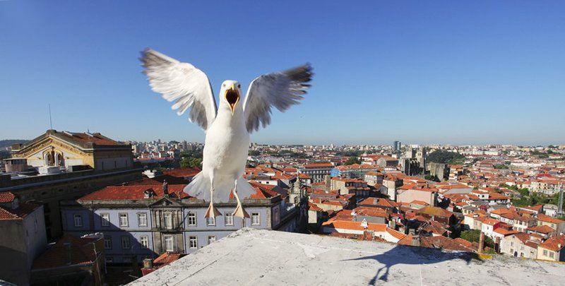 панорама, порту, чайка, португалия Панорама  г. Портуphoto preview