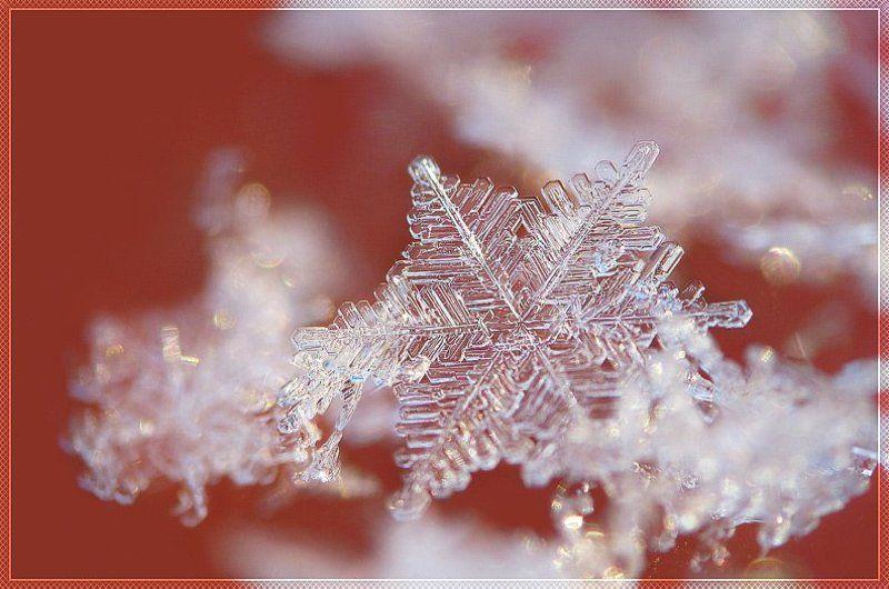 снежинка, макро хрупкие мирыphoto preview