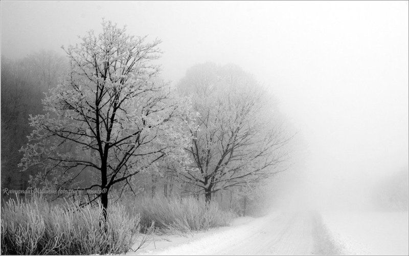туман, mist, fog, lithuania, tree,winter Fog upphoto preview