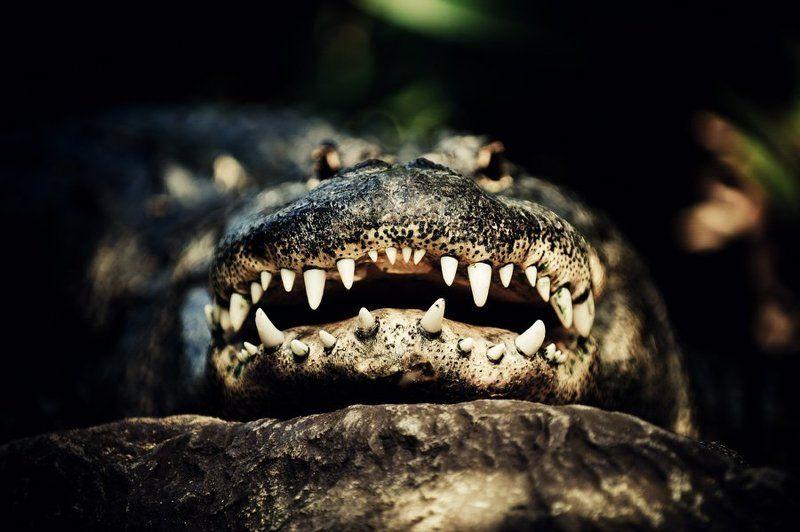 крокодил, глаза, зубы, лора Пришли мне колоши...photo preview