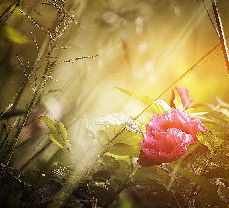 колір,світло,квітка,оранжевий fairytalephoto preview