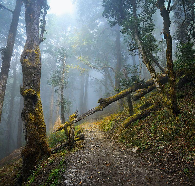 nepal, forest, Непальскими туманными тропами.photo preview