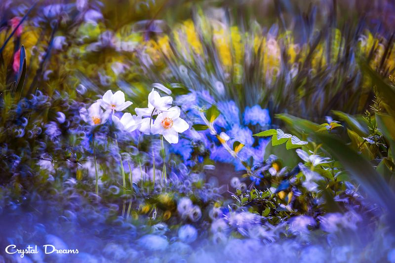 crystal dreams, macro, summer, color, art, nature, \