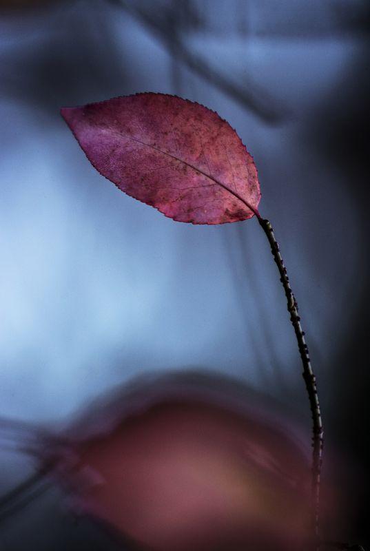 fall, autumn, autumnleaves, autumnweather, autumncolors, autumn2018, autumncolours, leaffall, autumnal, autumndays, autumntime, autumnsky, autumnstyle, falltime, season, seasons, instafall, instagramanet, instatag, instaautumn, leaf, photo preview