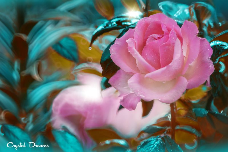 crystal dreams, macro, summer, color, art, nature, In the garden of my motherphoto preview