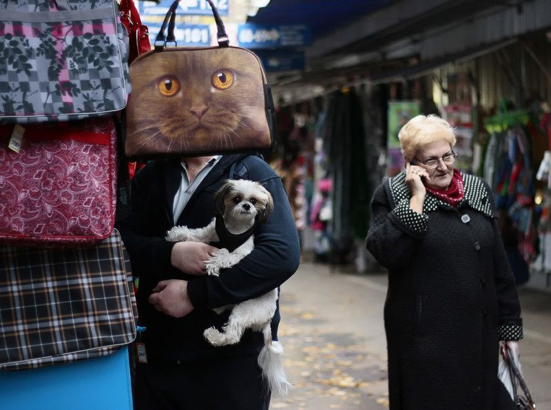 собака, кот, животные, сумка, рынок Год собаки )photo preview