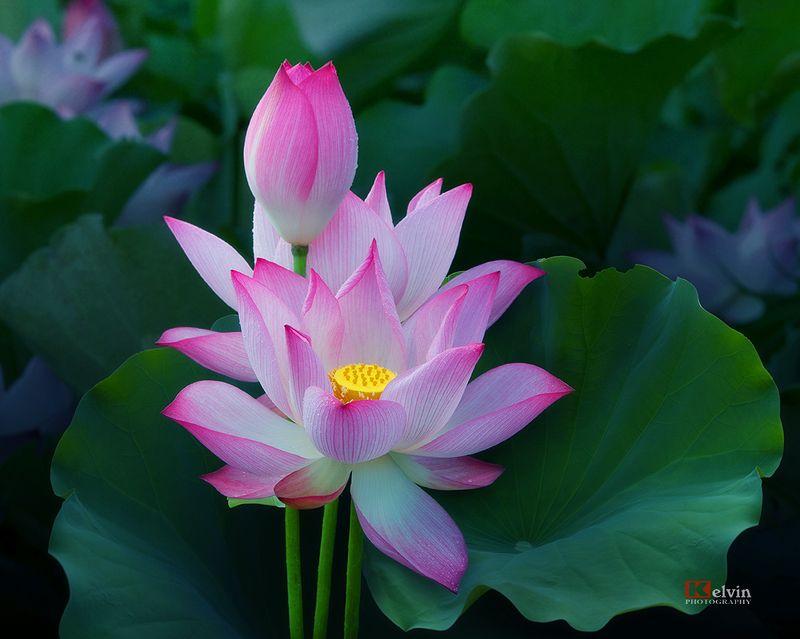 Hoa Senphoto preview