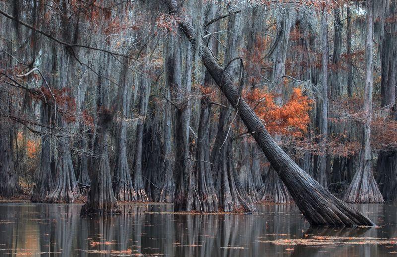 такие вот болота..photo preview