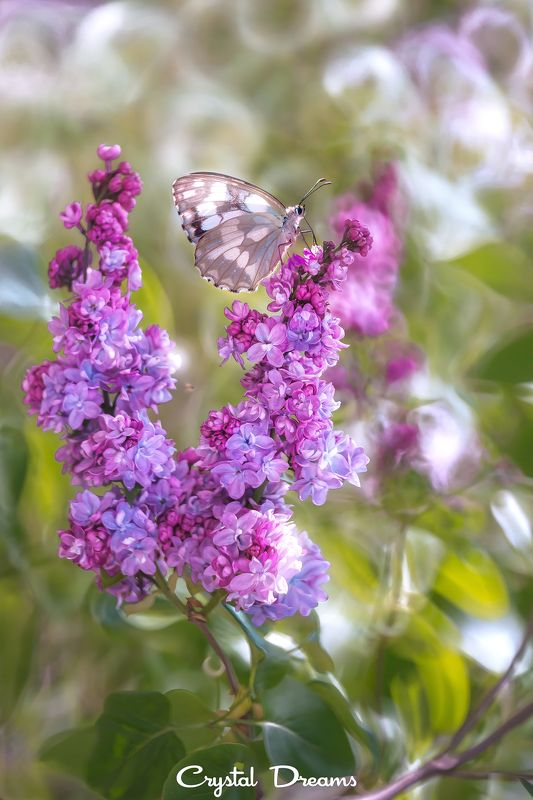 crystal dreams, macro, spring, color, art, nature, butterfly You are my tendernessphoto preview