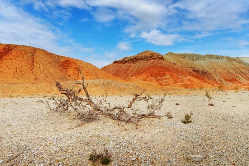 пустынные зарисовкиphoto preview