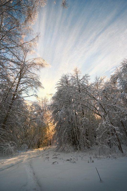 лес зимой, зимняя прогулка небо, солнце, снегphoto preview