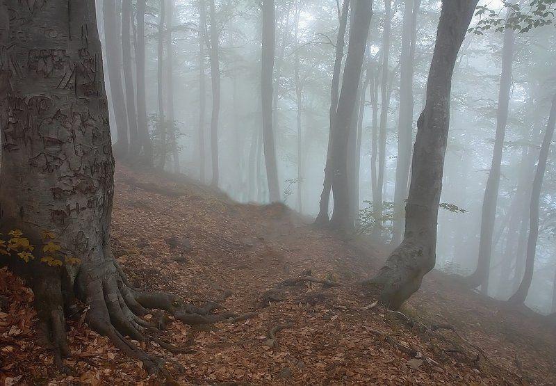 туман, тишина, осень ВДЫХАЯ ГРУДЬЮ ТИШИНУphoto preview