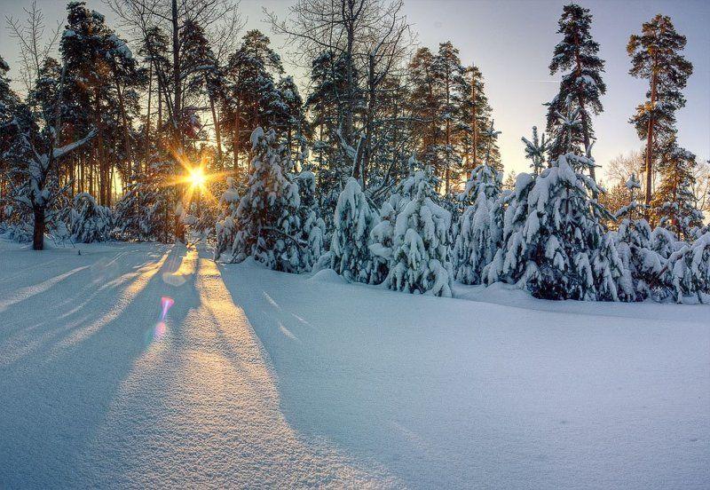 елки, зима, снег, сугробы елкиphoto preview