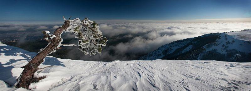 зима, сосна, снег, горы \