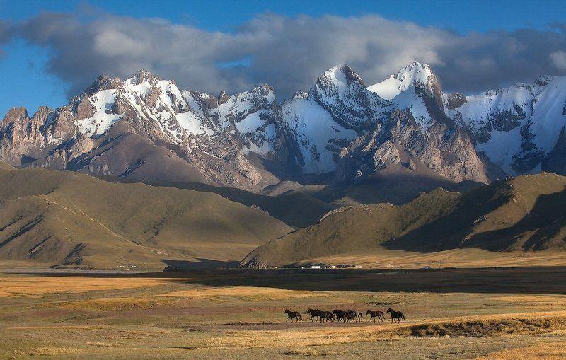 фотосафари, центральная азия на закатеphoto preview