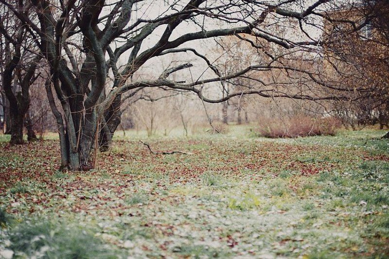 silent autumnphoto preview