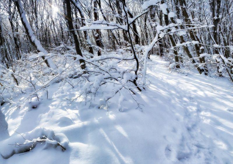 панорамки, камера телефона nokia x2 , cs 5 Зимние бродилки-1photo preview