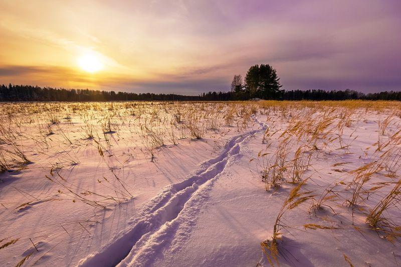 зима, вечер, поля, поле, лес, снег, закат, небо, солнце Зимний вечерphoto preview