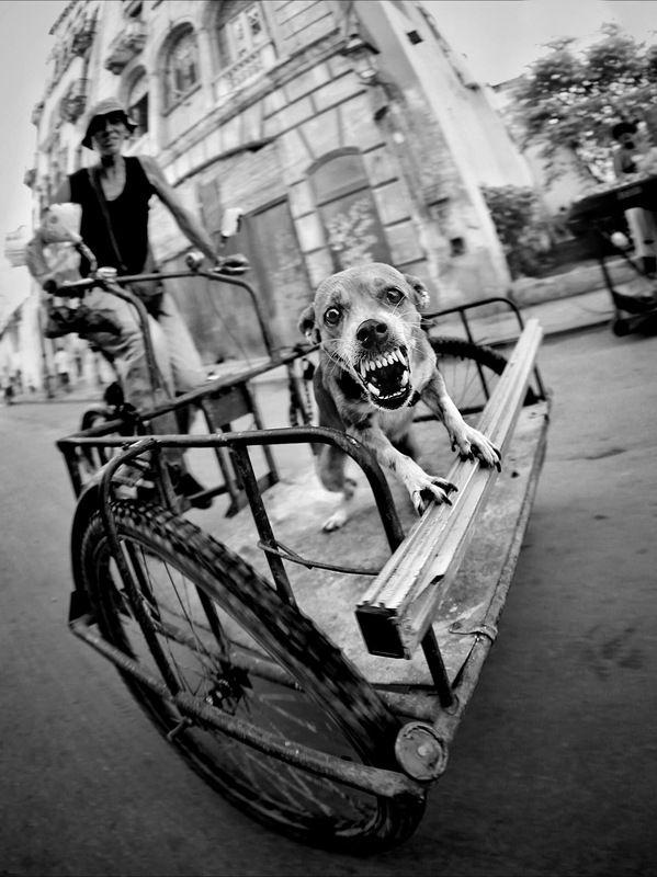 Жанр, уличная фотография С Новым Годом! С Годом Собаки photo preview