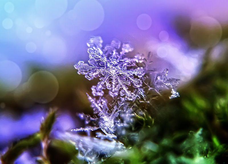 макро,снежинка Зимняя сказкаphoto preview