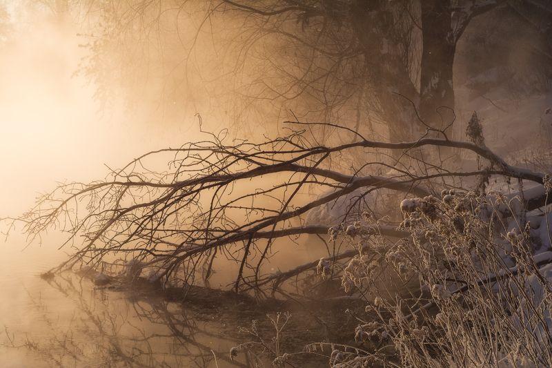 туман, утро, зима, золото, свет Золотой туманphoto preview