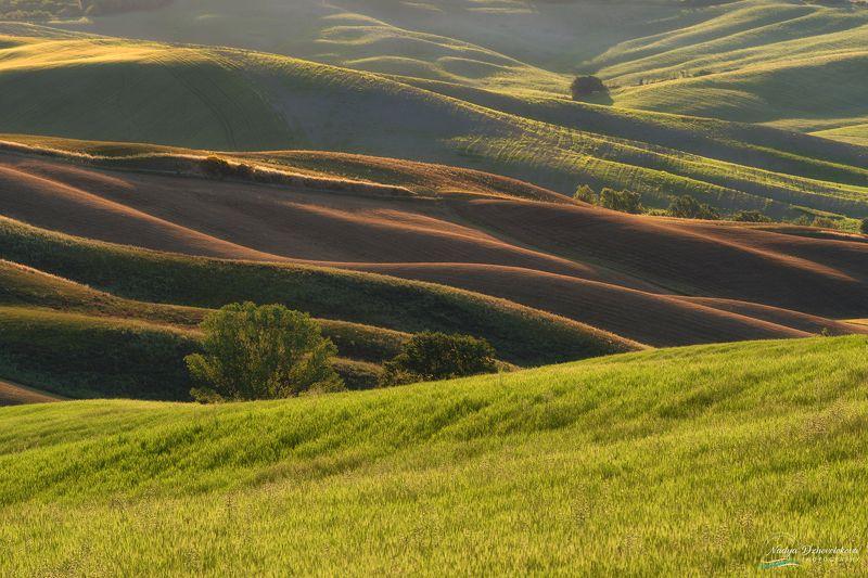 fields, tuscany, tree, sun, sunlight Golden fieldsphoto preview
