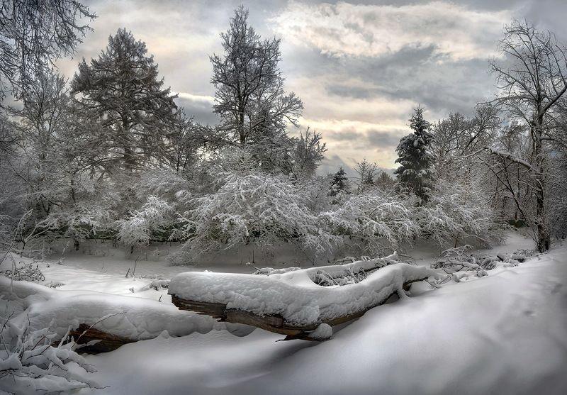 #зима, #снег, #зимнийпейзаж, #деревьявснегу, #зимниесумерки, #пейзаж Мысли о зиме...photo preview