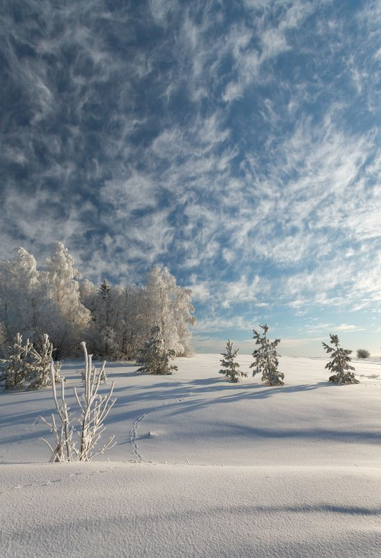 Поле снег сугробы иней лес облака кружева зима мороз небо Небесные кружеваphoto preview