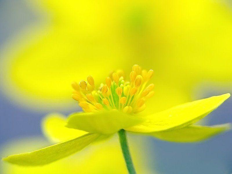 цветы Цветочноеphoto preview