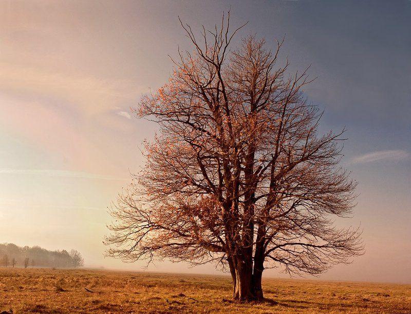 дуб, осень, россия Дубphoto preview