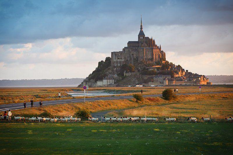 abbaye du mont saint michel, france Бараны & Abbaye du Mont Saint Michelphoto preview