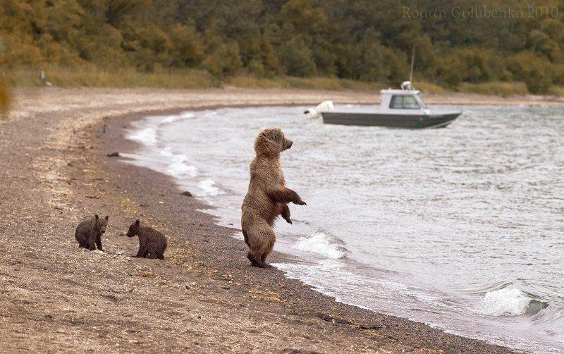 Возвращайся скорее с рыбалки, мой дорогой Гризли. Аляска 2010photo preview