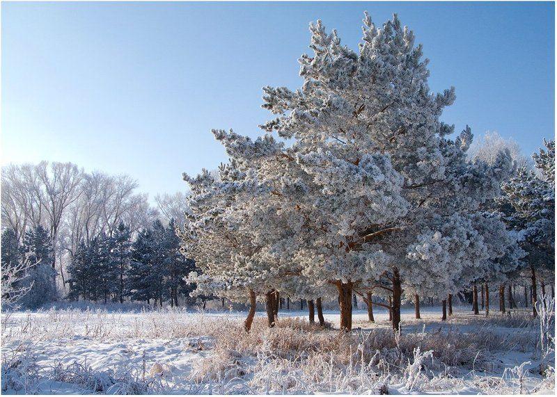 мороз, снег, зима, сосны Морозноphoto preview