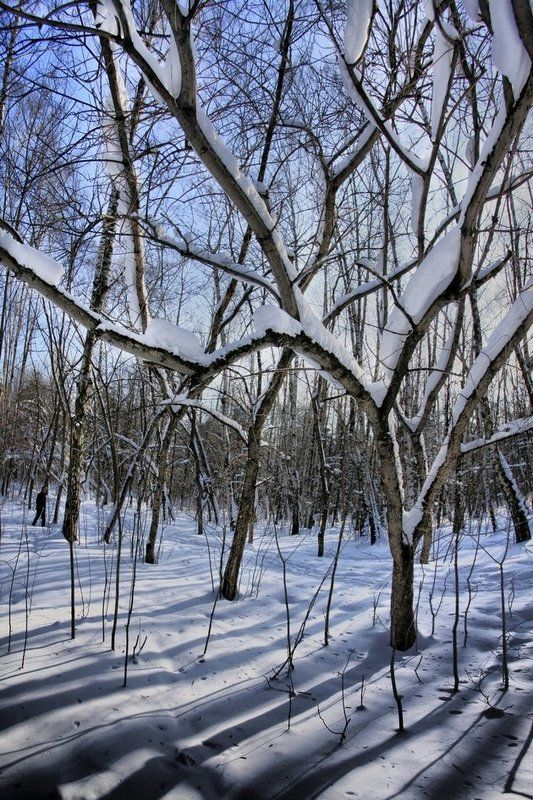 зима,снег,парк,шварц ГЕОМЕТРИЯ  ЗИМЫphoto preview