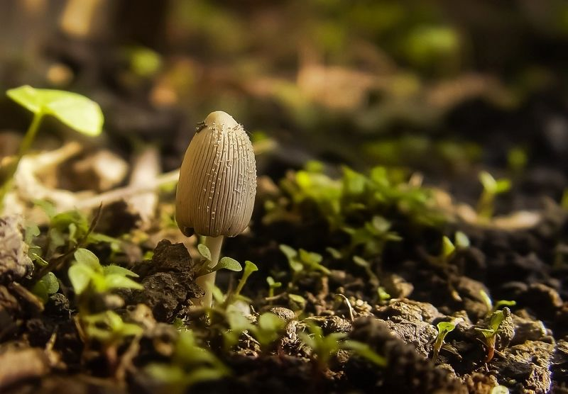 макро,природа,грибы Грибы бывают разныеphoto preview