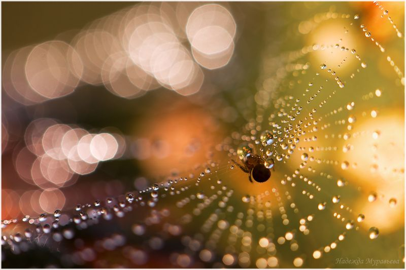 паутина, роса, паук Солнечная системаphoto preview