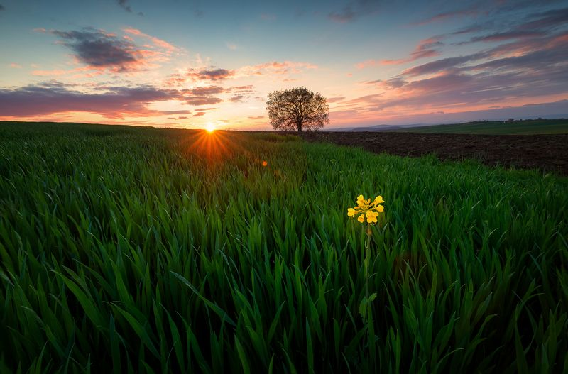 agronomy, blooming, cloud, clouds, colorful, daisy flower, dandelions, dusk, ecology, garden, green field, green fields, green grass, green mountains, greenery, health, idyllic, isolated, leafy, lonely flower, lonely tree, meadow flowers, oak, outdoor, ou Lonely flower and a tree in a green field of grassphoto preview