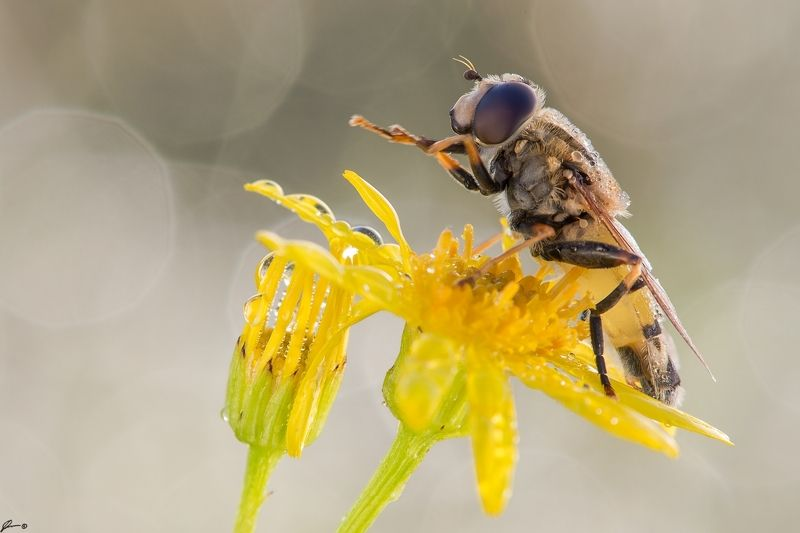 macro, makro, flowers, wild, wildlife, insect, nature ...photo preview