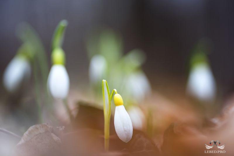 Весны посланникphoto preview