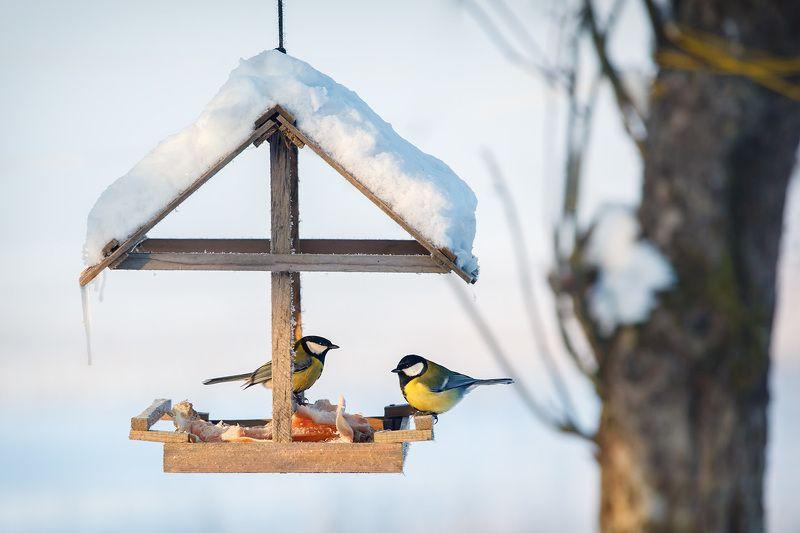 синица, зима, снег, холод, кормушка, птицы Tрудное времяphoto preview
