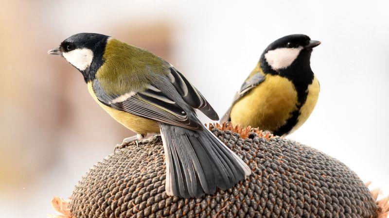 Птицы на кормушке photo preview
